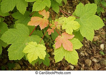 Leaves in shades of green and rust