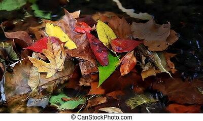 Leaves in Stream Loop HD