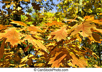 Leaves in the autumn
