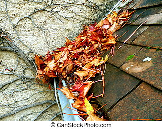 Leaves in the gutter