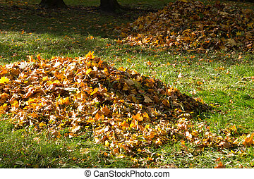 Leaves in the park in the autumn season