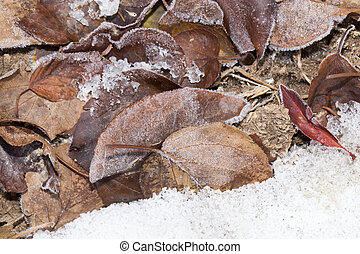 leaves in the snow outdoors