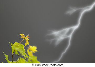 leaves in the storm