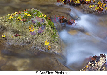 Leaves in the waterfall