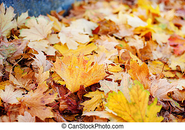Leaves in various autumnal colors. Fall foliage
