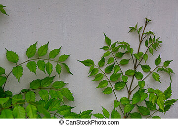 Leaves in wall