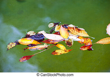 leaves in water fall