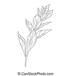 Leaves ink sketch on white background