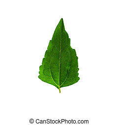 Leaves isolate on white background