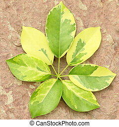 Leaves isolated on plaster background