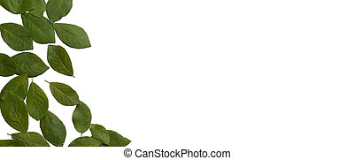 Leaves. Isolated on white background. Ecological concept. Top view.