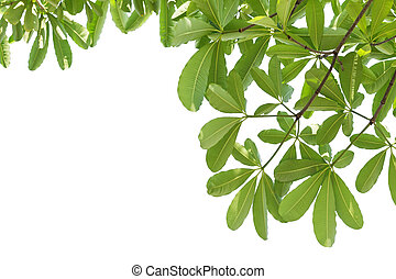 Leaves isolated on white background