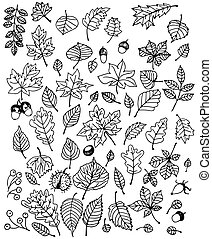 Leaves - Large set of various types of hand - drawn leaves