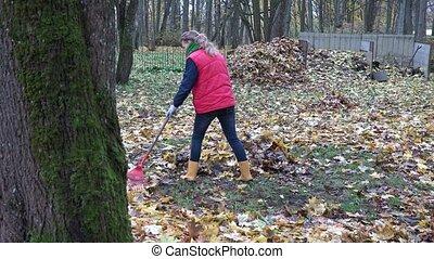 leaves lie on ground under tree and gardener woman rake...