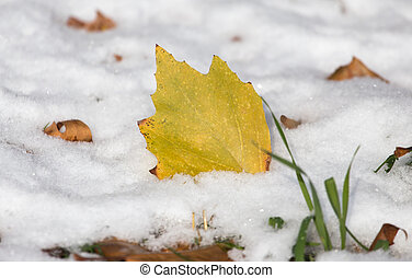 leaves lie on the snow in the winter