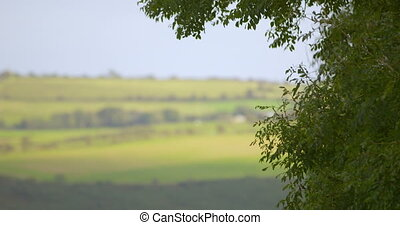 Leaves moving in the breeze in the countryside