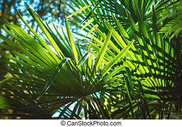 Leaves of a palm tree on blue sky background