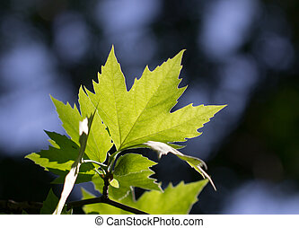 leaves of a tree in nature