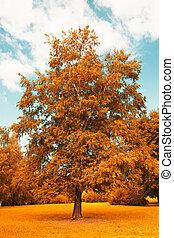 leaves of autumn flare tree