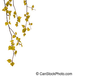 Leaves of birch on a white background