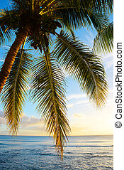 Leaves of coconut palm tree at sunset.