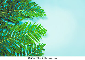 Leaves of fern on pastel blue background. Top view. Copy space. Summer.