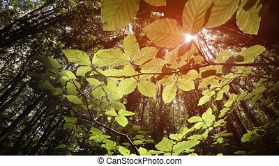 Rays of sunshine filter through the canopy of the forest to illuminate the bright green leaves of the undergrowth, below. Video 4k