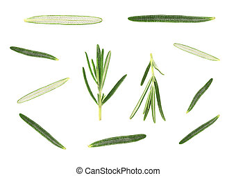 Leaves of fresh rosemary isolated on white background. Top view.
