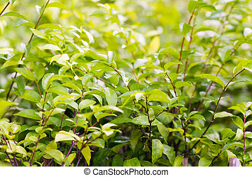 leaves of green bush in garden