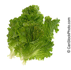 Leaves of green lettuce on a white background
