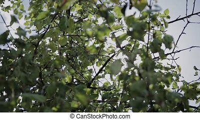 Leaves of green tree on a sunny day