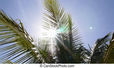 Leaves of Palm and Morning Light. Slow Motion.
