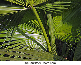 Leaves of palm fronds tree background - Leaves of tropical...