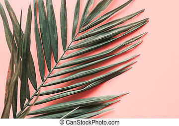 Leaves of palm on pink. Close up, isolated with copy space.