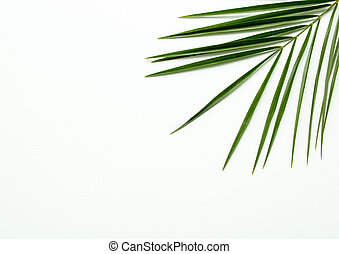 Leaves of palm on white background. abstract