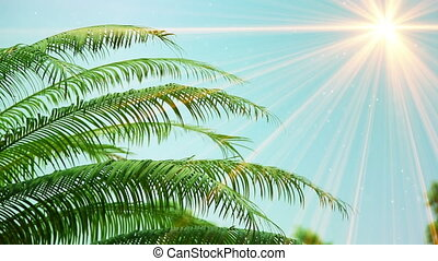 leaves of palm tree and sunrays seamless loop