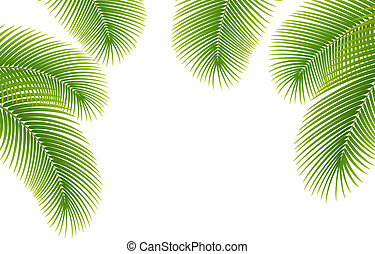 Leaves of palm tree on white background.