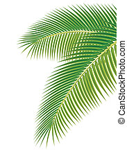 Leaves of palm tree on white background. Vector illustration...