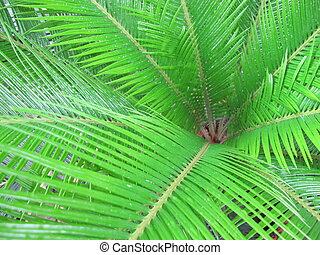 Leaves of palm trees