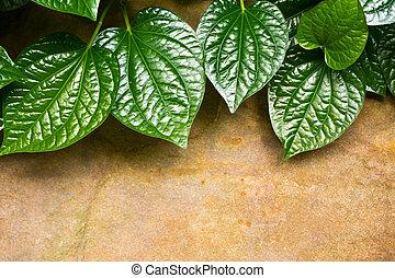 Leaves of Piper sarmentosum beside the stone slab floor