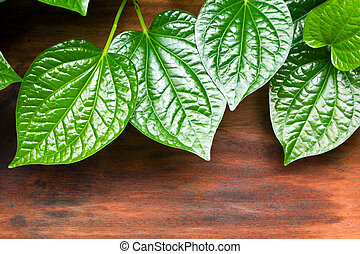 Leaves of Piper sarmentosum beside the wooden floor