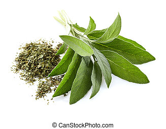 Leaves of sage. Fresh and dry