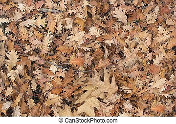 leaves of the forest in autumn