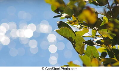 Leaves of the Tree on a Background Bokeh