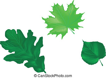 leaves of the trees. oak, maple, linden
