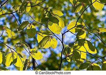 leaves of tree in detail