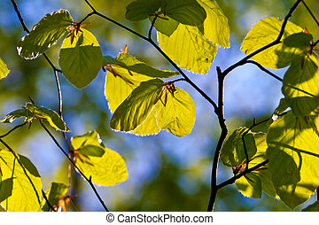 leaves of tree in detail