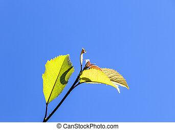 leaves of tree under blue sky