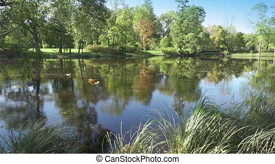 Leaves of trees slowly fall in water,Autumn park with the river,Landscape in a sunny day
