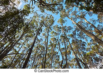Foliage of trees against blue sky